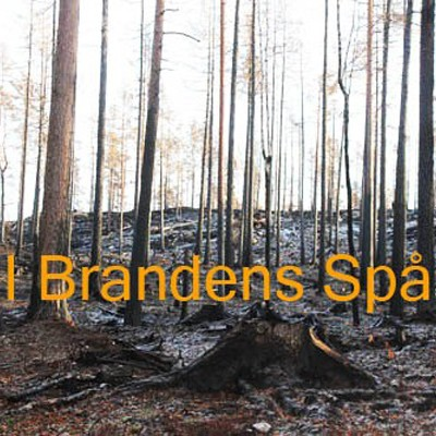 Guided tours in the burned forest