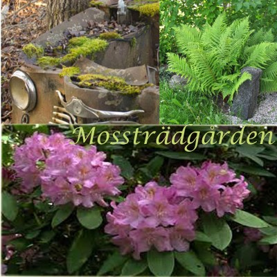 The Mossgarden